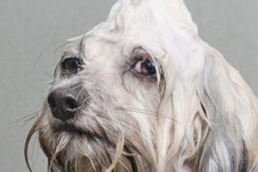 """""""Wet dog"""" : 5 chiens mouillés et trognons par Sophie Gamand"""