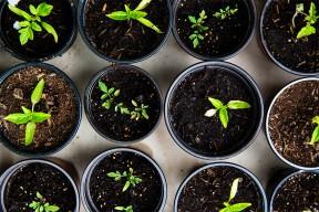 Jardinage : 10 livres pour avoir la main verte